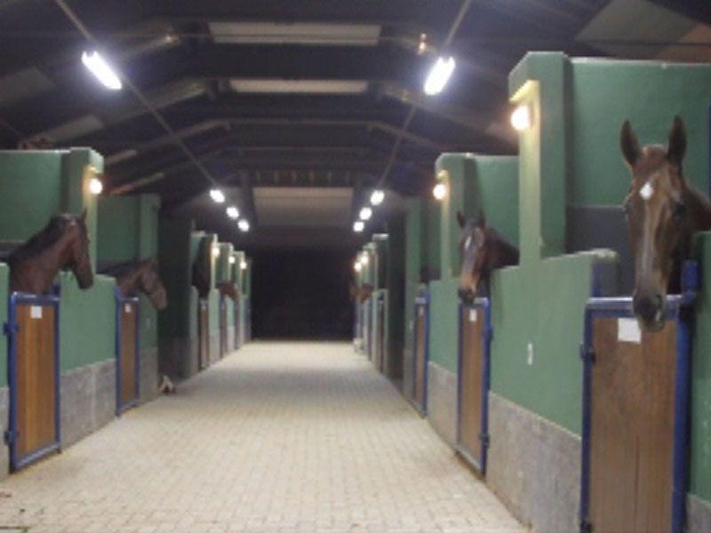 cavalos dentro do pavilhao